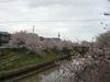 Sakurayuhodo