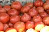 Tomato3_1